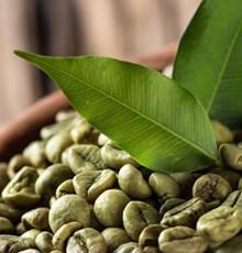 باید ها و نبایدهایی در مورد مصرف قهوه ی سبز