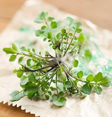 تقویت مغز و حافظه با گیاهان دارویی