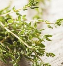 خواص مفید گیاه آویشن