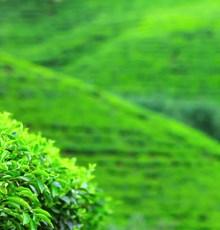 با مصرف این 7 نوع چای خارق العاده بدن خود را بیمه کنید!