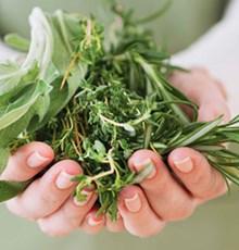 افزایش وزن با گیاهان دارویی
