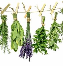 درمان نقرس با گیاهان دارویی