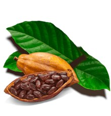 بررسی اثر محافظتی کاکائو بر سیستم قلبی-عروقی