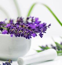 با این گیاهان دارویی دم دستی و پر خاصیت آشنا شوید