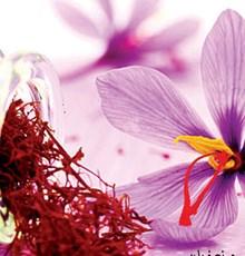 نکاتی درباره زعفران