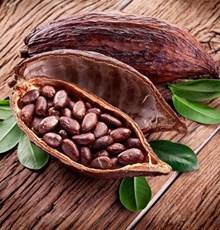 فواید دانههای کاکائو