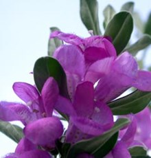 اگزما را با این گیاه درمان کنید