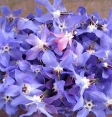 خواص فوق العاده گل گاوزبان را می دانید؟