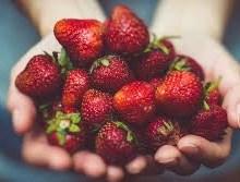 توت فرنگی، یک غذای کاربردی