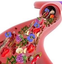 خون خود را با گیاهان تصفیه کنید