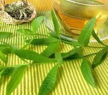 گیاهی پر کاربرد در طب سنتی که حالتان را زیرو رو میکند