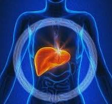 اثرات دمنوش ها و داروهای گیاهی بر این عضو حیاتی بدن