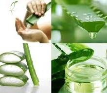 ریزش مو و گیاهان موثر برای درمان آن
