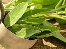 خواص دارویی چای سبز