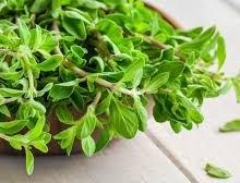 مرزنجوش، گیاهی برای تسکین انواع درد